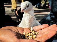 بازار پرندگان اهواز به روایت تصویر