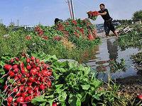 آبیاری ۱۵۰۰ هکتار از مزارع کشاورزی با فاضلاب