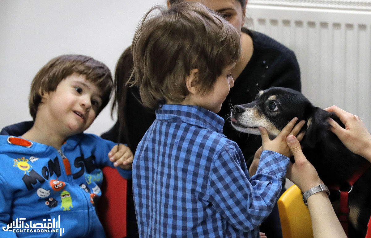 سگهای درمانی در سراسر جهان
