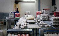 اعلام آمادگی اتحادیه مرغداران میهن برای عرضه تخم مرغ به میادین میوه و ترهبار/ هر شانه تخم مرغ 15.200تومان
