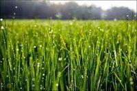 توصیههای هواشناسی کشاورزی برای روزهای آینده