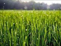 ۱۰هزار میلیارد ریال تسهیلات برای خرید تضمینی محصولات کشاورزی