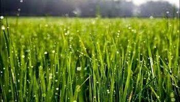 توصیههای هواشناسی کشاورزی تا ۳۰مرداد