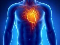 آناتومی و فیزیولوژی دستگاه قلبی عروقی و عملکرد قلب انسان