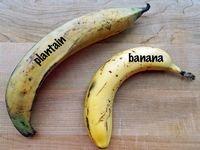 «پلانتین» می خوررید یا موز! +تصاویر