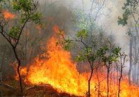 گسترش آتشسوزی در جنگل توسکستان گرگان