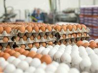بازار تخم مرغ در انتظار آرامش