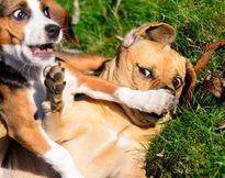 برندگان مسابقه عکاسی کُمدی حیوانات خانگی +تصاویر