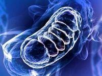 نقش متابولیسم در عملکرد سلولهای ایمنی