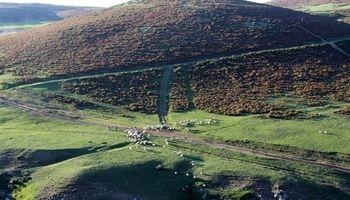 دهکده ییلاقی