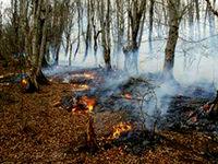 فاجعه سرخ برای سومین روز در جنگل کجور زبانه کشید