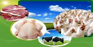 هشدار نسبت به مصرف آنتی بیوتیک در محصولات دامی/ ضرورت استفاده از خوراک صنعتی