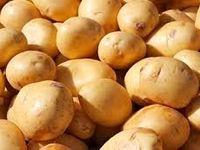 سیبزمینی باز هم گران شد