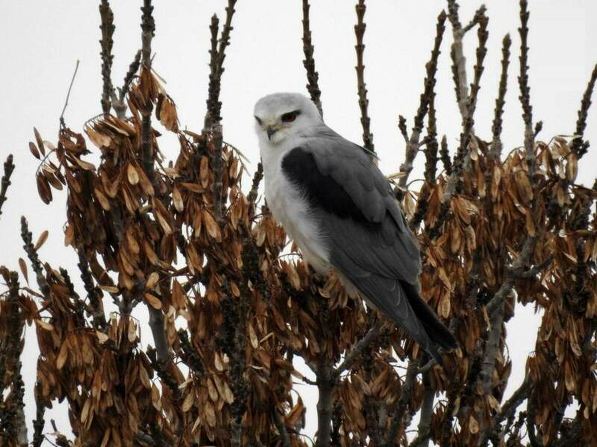 """مشاهده پرندهای نادر در """"قُم"""" +عکس"""
