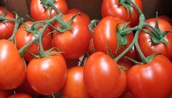 مشکل اقتصاد گوجه فرنگی کجاست؟