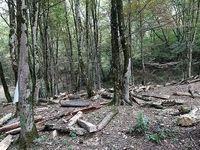 تخریب عرصههای جنگلی خطر گسترش بیابان را به همراه دارد