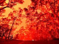 آتشسوزی گسترده در جنگلهای خاییز کهگیلویه +فیلم