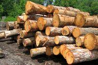 کشف ۲.۵تن چوب قاچاق در جنوب غرب پایتخت