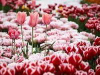 تولیدکنندگان گل تزئینی تسهیلات ۹تا ۱۲درصدی میگیرند