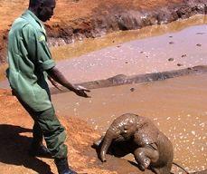 فیلی که به انسانها اعتماد کرد +عکس