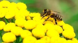 کوله پشتی دیجیتالی برای زنبورها