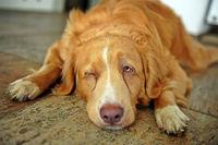 حیوانات خانگی کرونا میگیرند؟