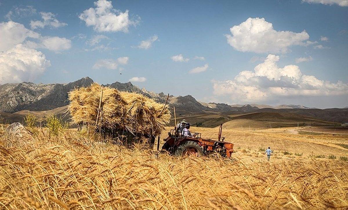 ضرورت افزایش ردیف بودجه برای خرید گندم از کشاورزان