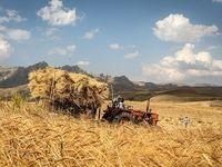 نرخ جدید خرید گندم همچنان 100تومان کمتر از هزینه تمام شده تولید/ چارهای جز افزایش بهرهوری و کاهش ضایعات نداریم