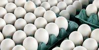 احتمال واردات تخممرغ ۲دلاری از ترکیه وجود دارد +فیلم