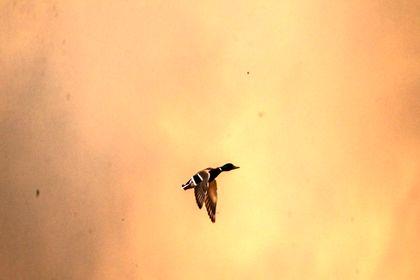 آتشسوزی در تالاب میقان اراک +تصاویر