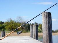 واردات چوب ماهیگیری به ۷ تن رسید
