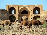 کاروان شتر در پارک ملی کویر +تصاویر
