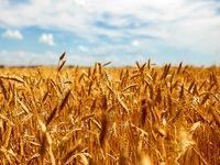 سیر صعودی صادرات غذایی روسیه