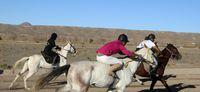 مسابقات اسبدوانی در بیرجند +تصاویر