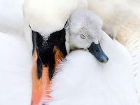 پرندگان چگونه از نوزادانشان مراقبت میکنند؟ +تصاویر