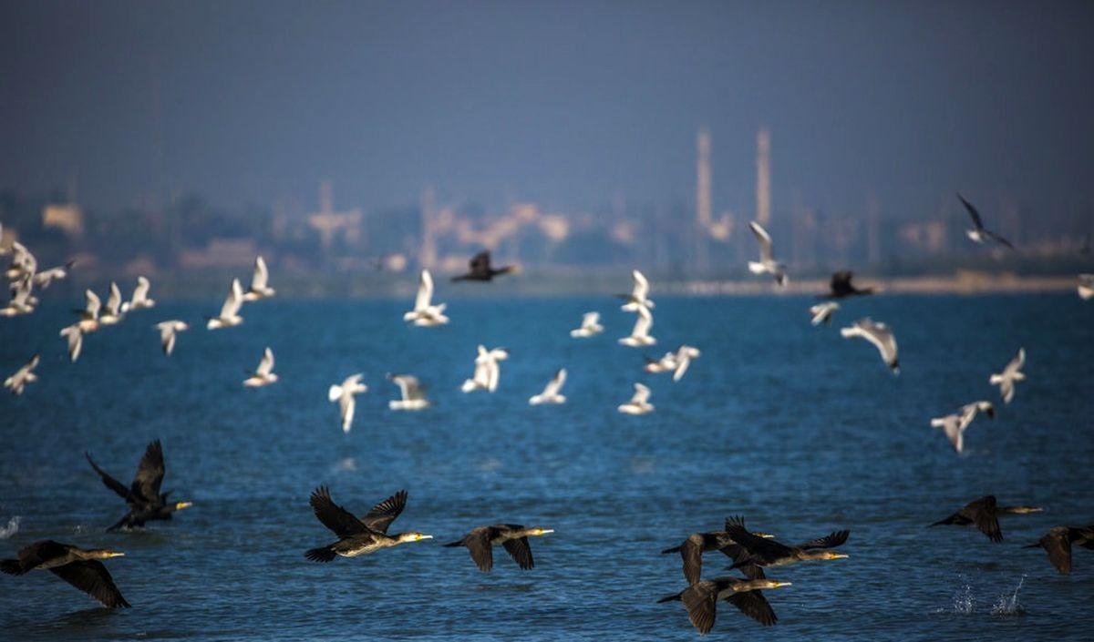 شیوع آنفلوآنزای پرندهها را چگونه بگذرانیم؟