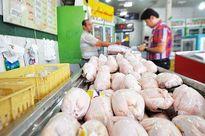 افزایش نرخ مرغ در بازار به کیلویی 11هزار تومان