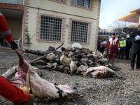 گوشتهایی که در هواپیمای سانحهدیده سوخت! +تصاویر