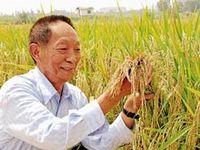 چین چگونه امنیت غذایی 1.4میلیارد نفر را تامین میکند؟