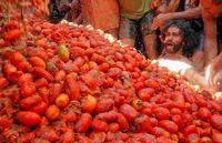 قیمت گوجهفرنگی به ۱۴هزار تومان رسید