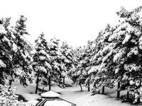 بارش مجدد برف در کشور از جمعه
