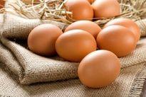 خرابکاری در صادرات تخم مرغ مشکلساز شد