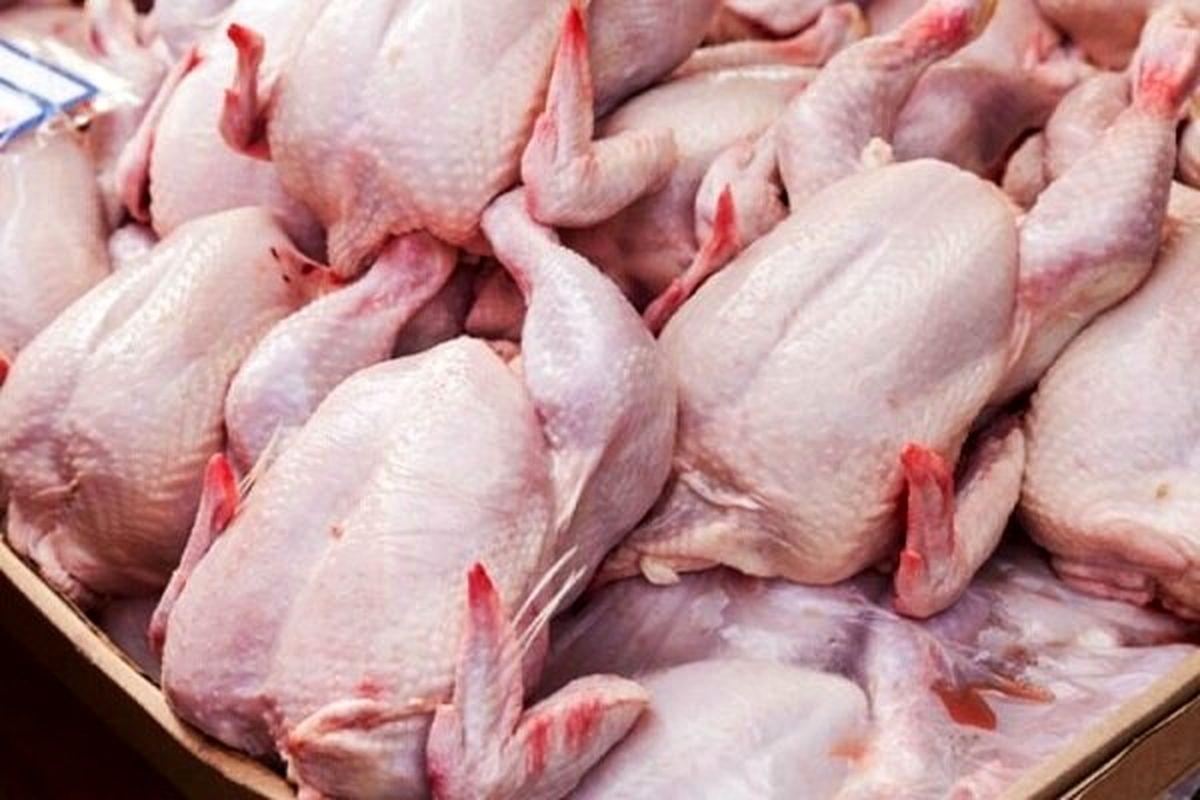 دلایل چندگانه نابسامانی بازار مرغ