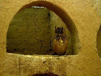 تصاویر زیبا از باغ پرندگان اصفهان