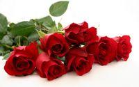 ۳۰هزار تومان؛ قیمت هر شاخه گل رز