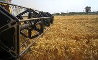 عقب ماندگی از میزان خرید گندم جبران شد/خرید تضمینی گندم به ۷میلیون تن نزدیک شد