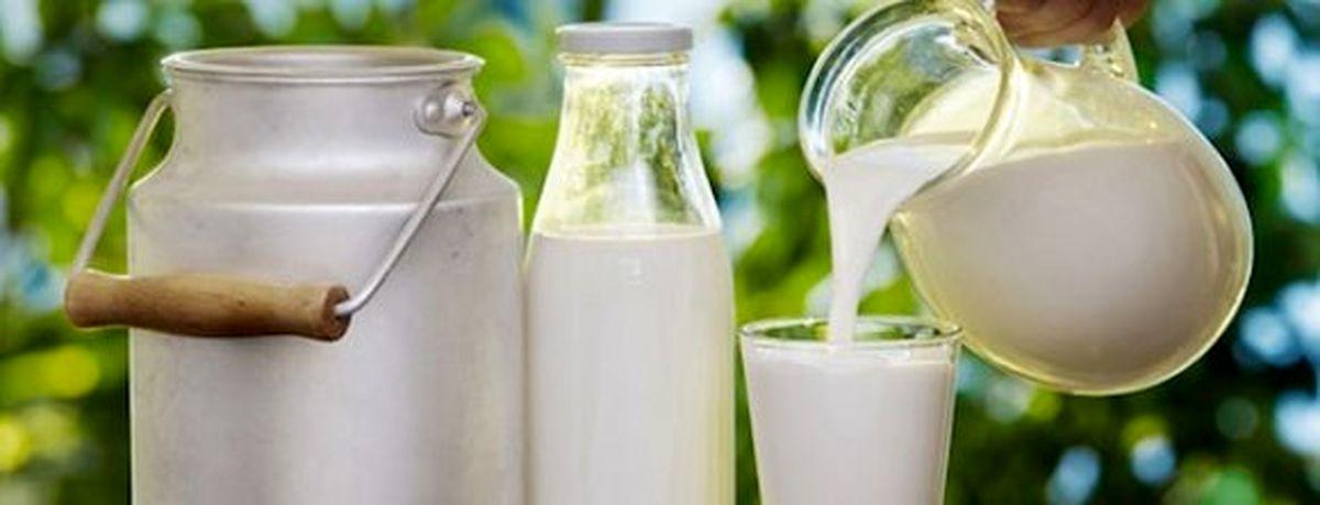 ترفندهای دلالان برای میکروبکشی در شیر