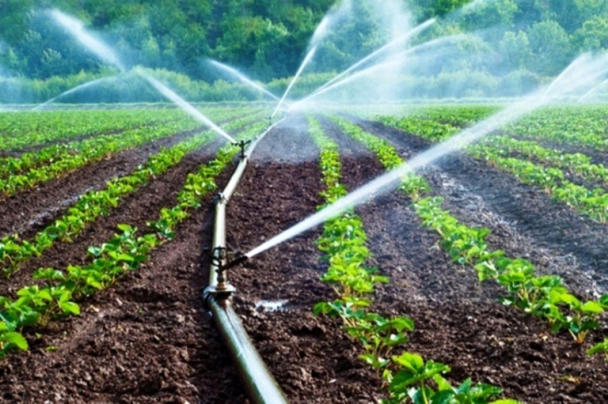 رشد سهم بخشهای کشاورزی و خدمات در اشتغال/ پایتخت با 63.5درصد بالاترین نرخ اشتغال در حوزه خدمات