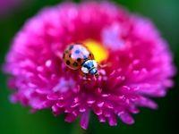 زیباترین تصاویر از دنیای حیوانات