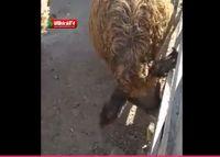 ویدیوی باورنکردنی که صادق خرازی منتشر کرد +فیلم